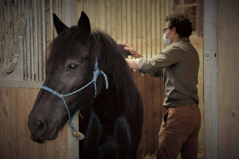 teambuilding par equipes ou team building en équipe pour séminaire autour du cheval a rennes atelier equicoaching sans agence