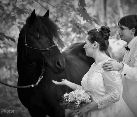 mariage thème cheval bretagne