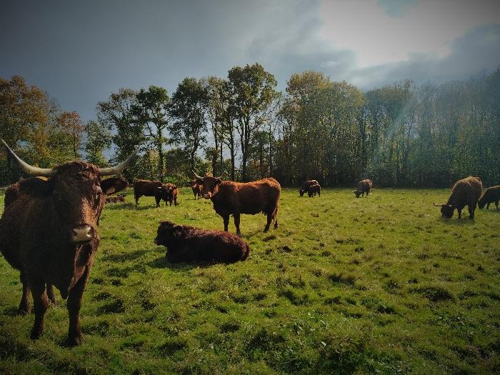 animation visite élevage boeuf bio rennes- sortie a la ferme - seminaires-incentive-teambuilding-rennes